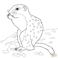 arctic ground squirrel coloring page free printable coloring pages