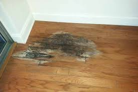 Hardwood Floor Repair Water Damage Easy Tips Removing Water Damage From Wood It S Works Water
