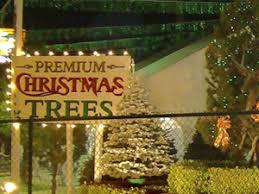best places to buy a tree cbs las vegas