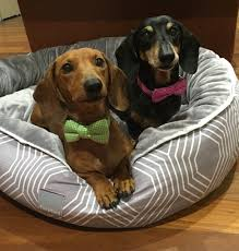 pizza dog bed bella bailey we are 2 mischievous and insanely cute miniature
