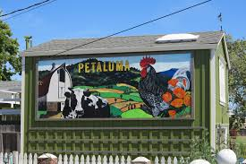 domestic mural petaluma style southern sonoma country life