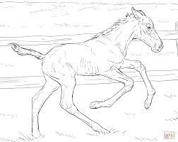 bucking foal coloring page free printable coloring pages