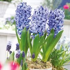 Indoor Fragrant Plants - indoor garden gifts for growing gift ideas gardening