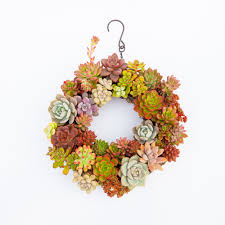 online get cheap hanging wall planter for succulents aliexpress