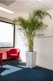 Indoor Plant For Office Desk Things To Consider For Installing The Best Indoor Plants For