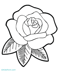 drawn sketch rose flower pencil and in color drawn sketch rose