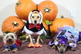18 adorable animals in halloween costumes u2013 risefeed