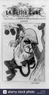 caricature showing english naturalist charles darwin as a monkey