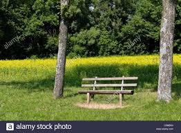 a bench under two trees in front of a rapeseed field in a park
