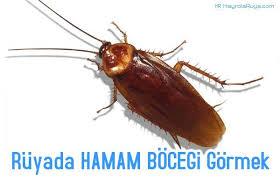 geographical pattern ne demek rüyada hamam böceği görmek