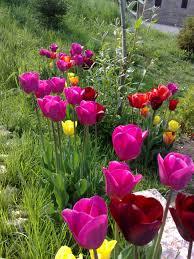 immagini di giardini fioriti giardini fioriti podere terra nuova