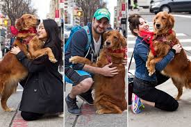 meet the dog bringing love to new yorkers one hug at a time new