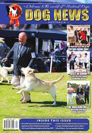 belgian shepherd victoria australia dog news australia march 2017 by dog news australia issuu