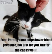 Cat Facts Meme - captions by ilove funny catsme fact pettinga cat helps lower blood