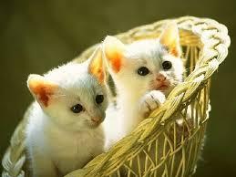 beautiful kittens beautiful and cute kitten