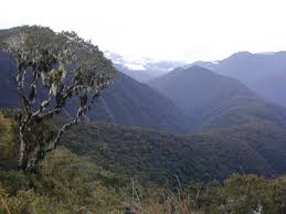 inca treasure remarkable new tree genus discovered in the