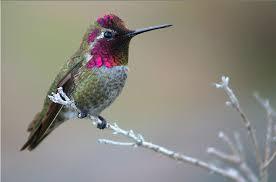 mammiferi volanti in forte declino gli uccelli e i mammiferi impollinatori