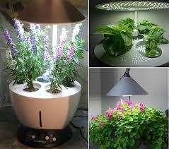 fashionable indoor vegetable gardening secret indoor vegetable
