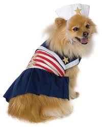 Cute Dog Halloween Costumes 26 Dog Halloween Costumes Images Dog Halloween