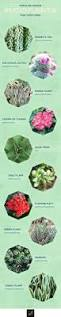 Types Of Indoor Plants 20 Popular Types Of Succulents Ftd Com