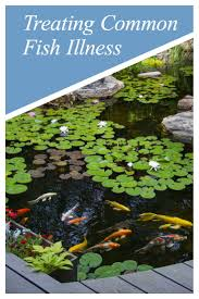 818 best koi pond backyard images on pinterest fish ponds