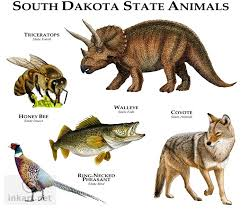 South Dakota wild animals images Full color illustration of a state animals of south dakota jpg