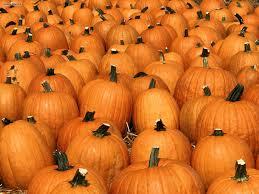 halloween pumpkin patch background pumpkin wallpaper wallpapers browse