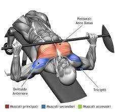 decline bench press muscles decline bench press gym workout chart