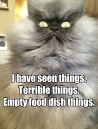 Colonel Meow Memes - i shudder just thinking about it lolcats lol cat memes funny
