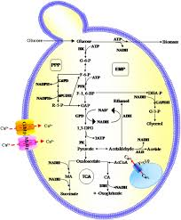 a novel approach to regulate cell membrane permeability for atp