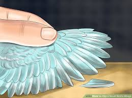 Bird Wing - how to clip a small bird s wings 12 steps with pictures