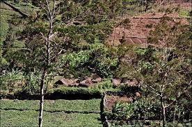 biomanix papua irian jaya distributorvimaxcanada com agen