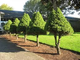 plant for home decoration decorative trees and plants for home decoration u2014 tedx designs