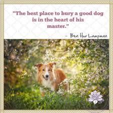 loss of pet loss of pet quotes