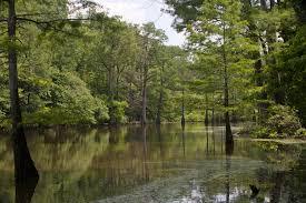 Mississippi forest images Delta national forest mississippi great river road jpg