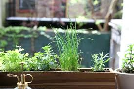 Window Sill Herb Garden Designs Small Window Herb Garden Hanging Kitchen Herb Garden Herbs Garden