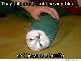Burrito Meme - burrito cat weknowmemes