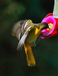 33 best plants for birds top tips for attracting orioles to your yard birds and blooms