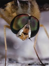 Cutter Bug Free Backyard The Best Bug Foggers Hunker