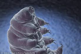 meet the toughest animal on the planet the water bear can survive