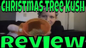christmas tree kush youtube