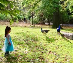 happy halloween at bronx zoo u2014 gabriela kropf