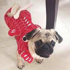 Halloween Costumes Yorkies Aliexpress Buy Funny Halloween Pet Cat Dog Fish Goldfish