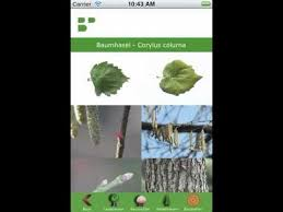 tree identification android apps on play