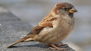 Sparrow by Sparrow Thinks It Might Have Caught Bird Flu After Puking Seeds