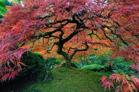 16 of the most incredibly majestic trees in the world