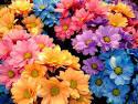 ดอกไม้ Facebook กราฟฟิคสำหรับคอมเม้น - Flower - ThaiComment
