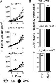 adenosine a2b receptor blockade slows growth of bladder and breast
