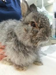 this angel bunny needs your help the bunny bunch