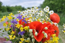 Best Flower Delivery Service Best Online Flower Delivery Service In India 2017 U2013 Shibu Nath